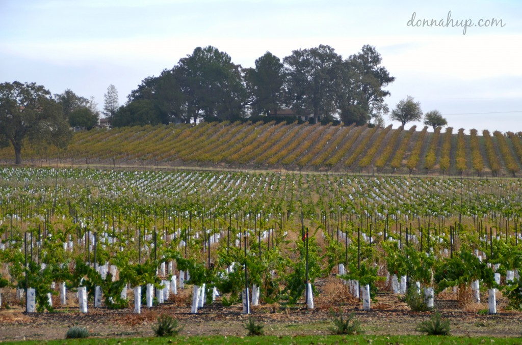 Visiting Paso Robles, CA #Travel #winecountry #PasoRobles #California #wine #foodie #review