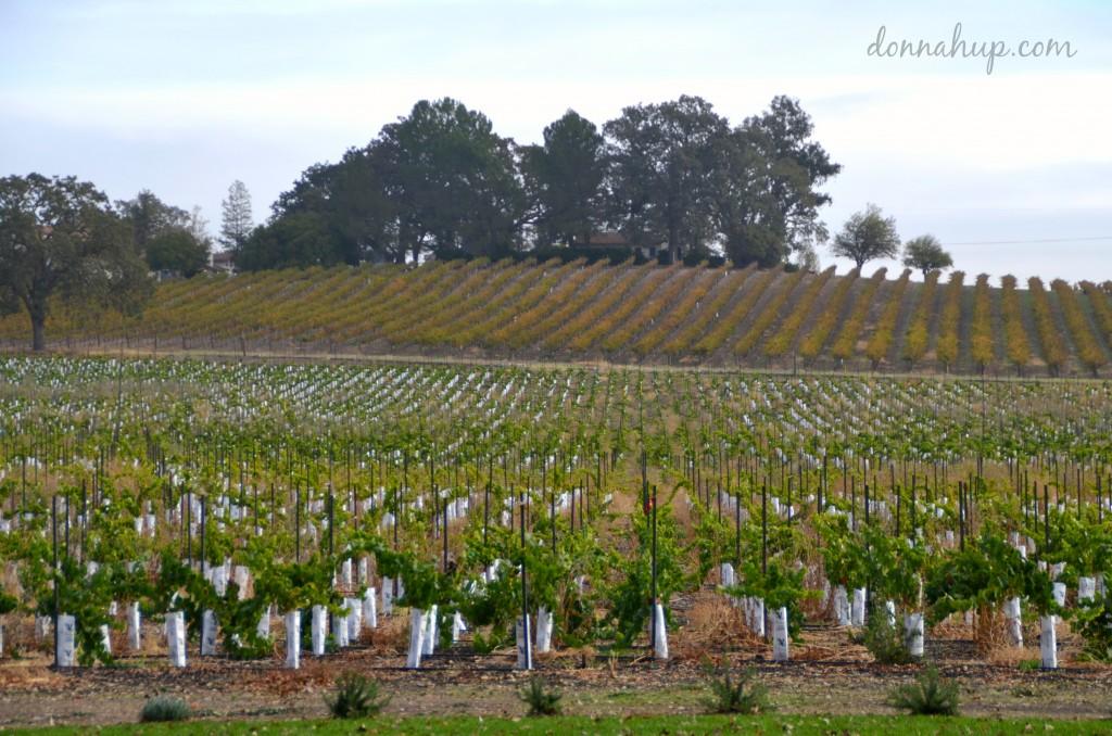 Visiting San Robles, CA #Travel #winecountry #California