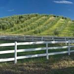 Olive-Ranch-copy1