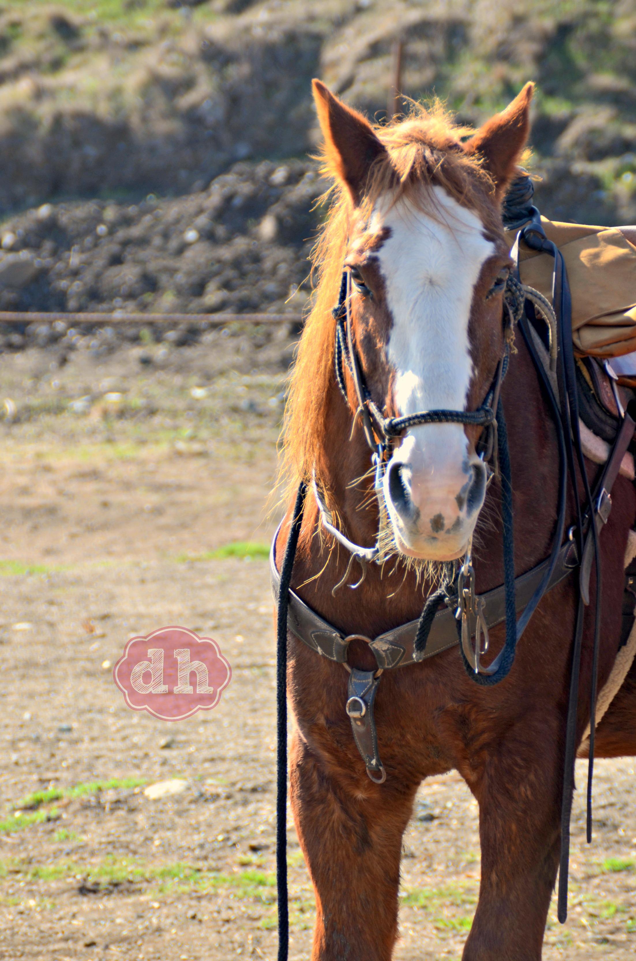 Horseback Riding at the Madonna Inn