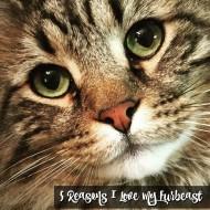 5 Reasons I love my Furbeast #MyCatMyMuse