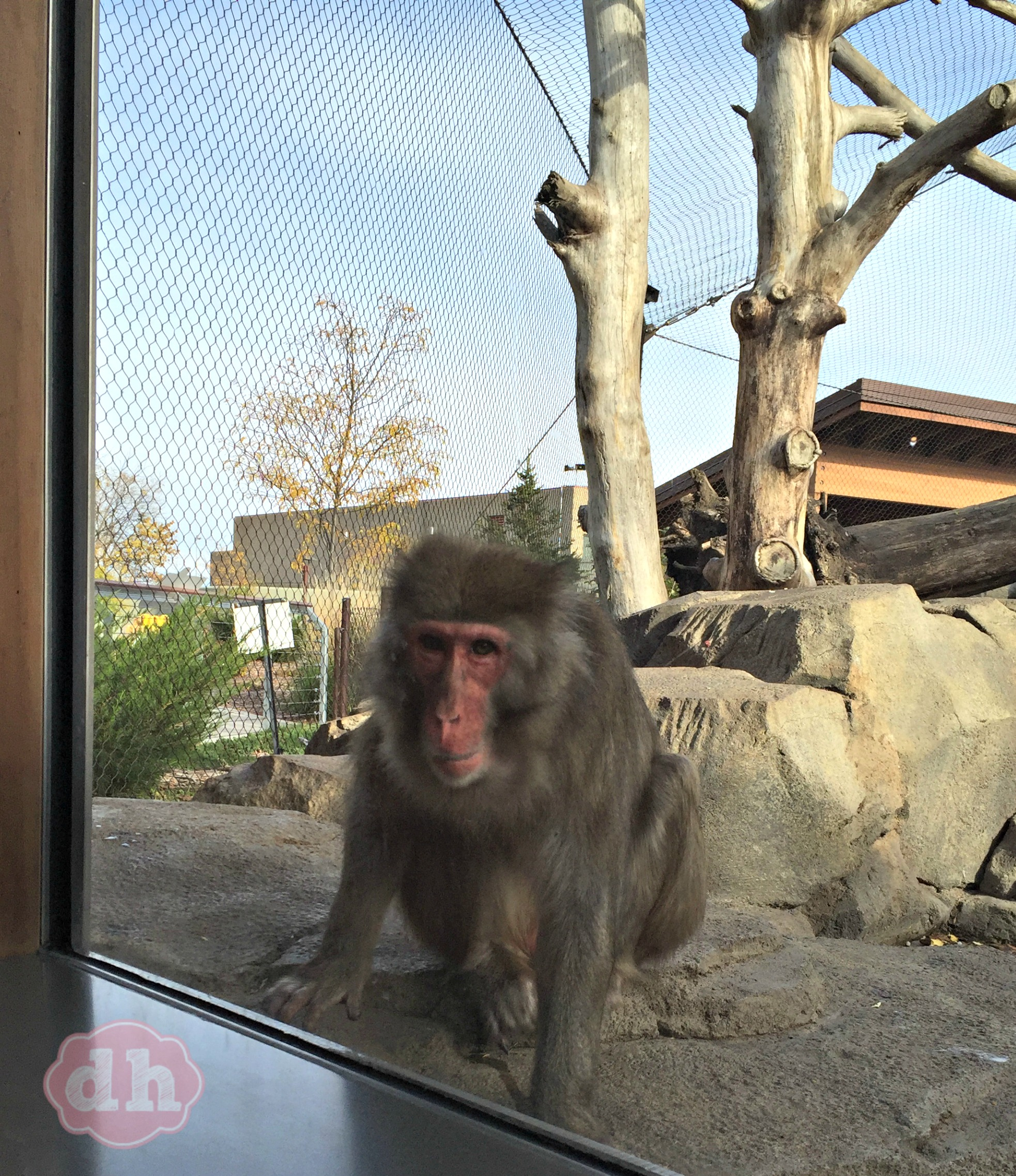 I met the Cutest Monkeys at the Great Plains Zoo