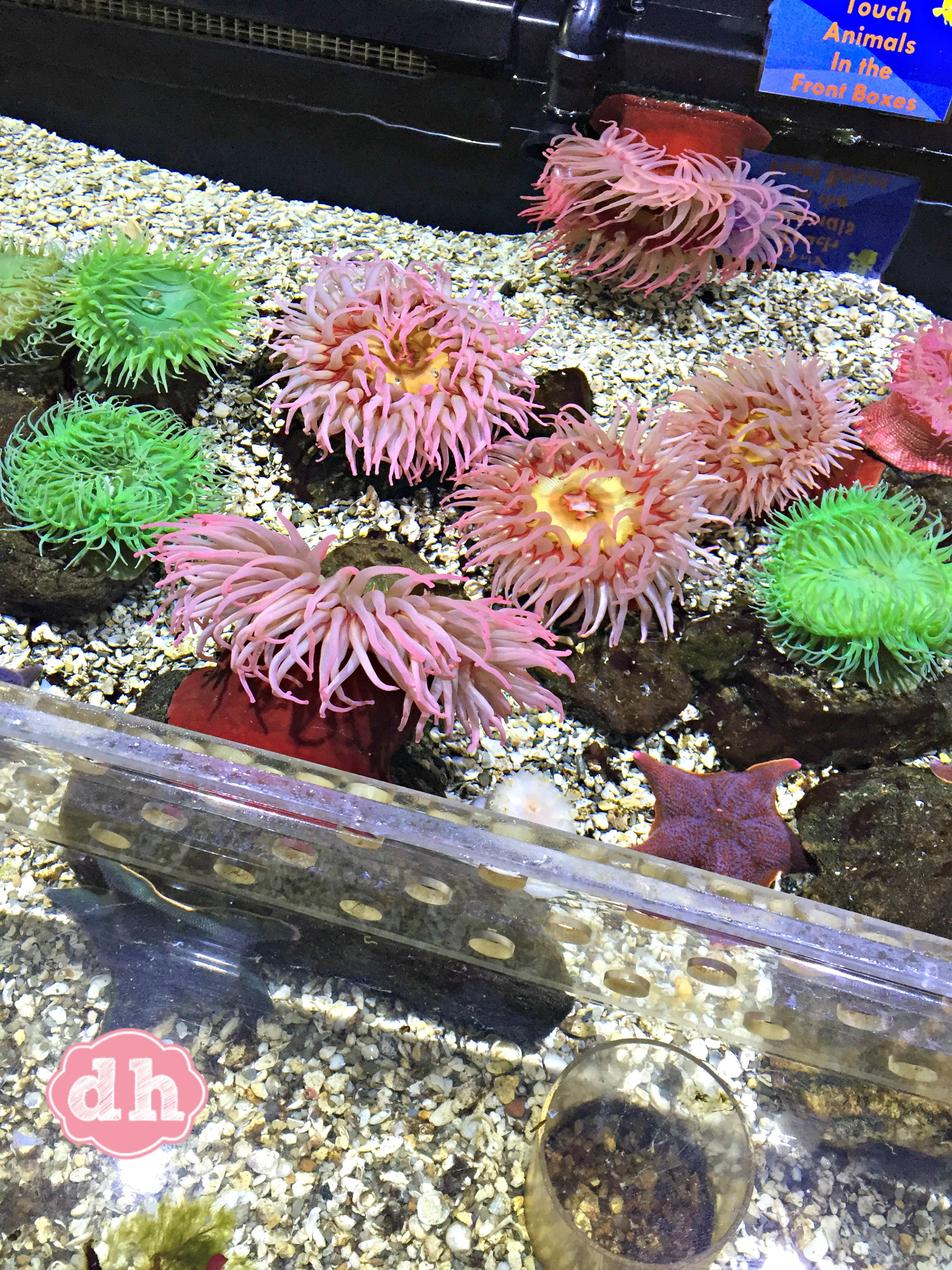 sertoma butterfly house & marine cove in sioux falls - donnahup