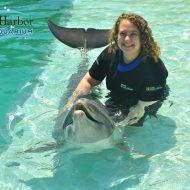Swim with Dolphins Miami Seaquarium Dolphin Encounter