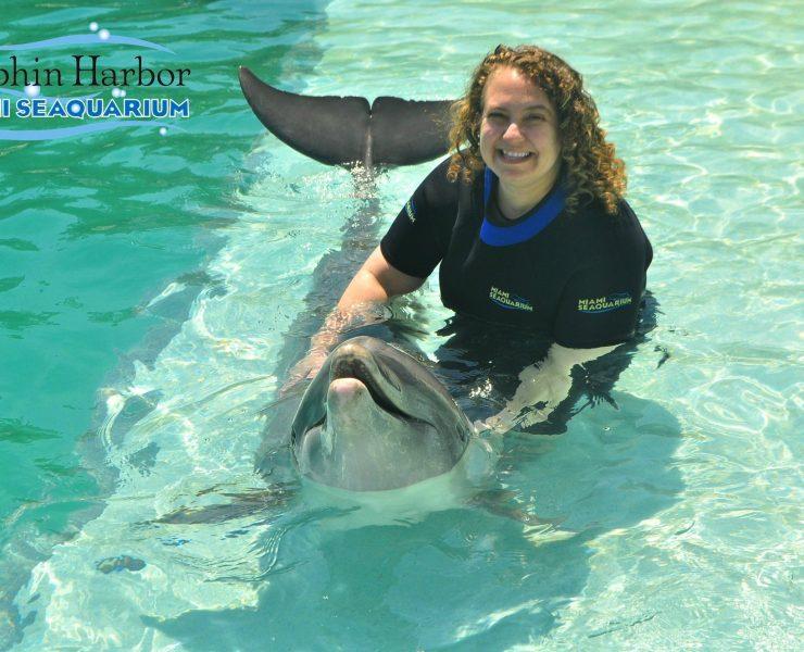 My Dolphin Encounter