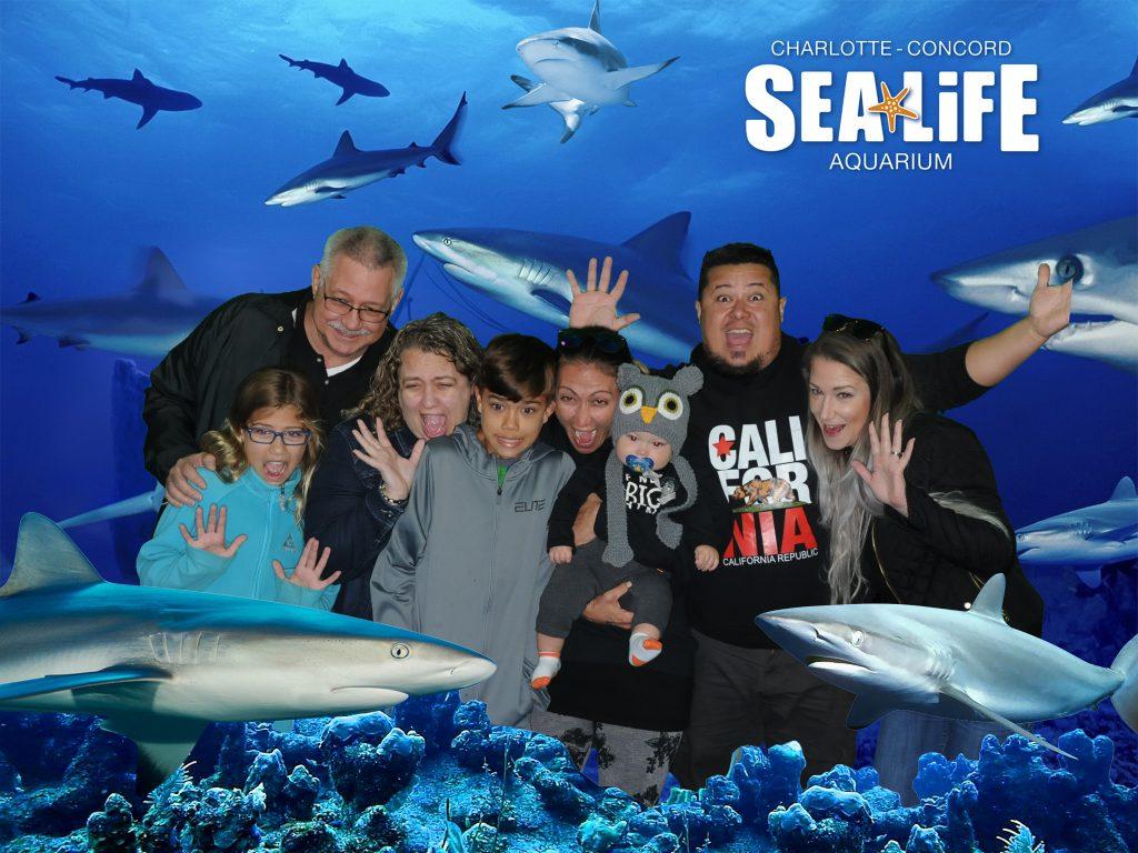 Sea Life in Charlotte