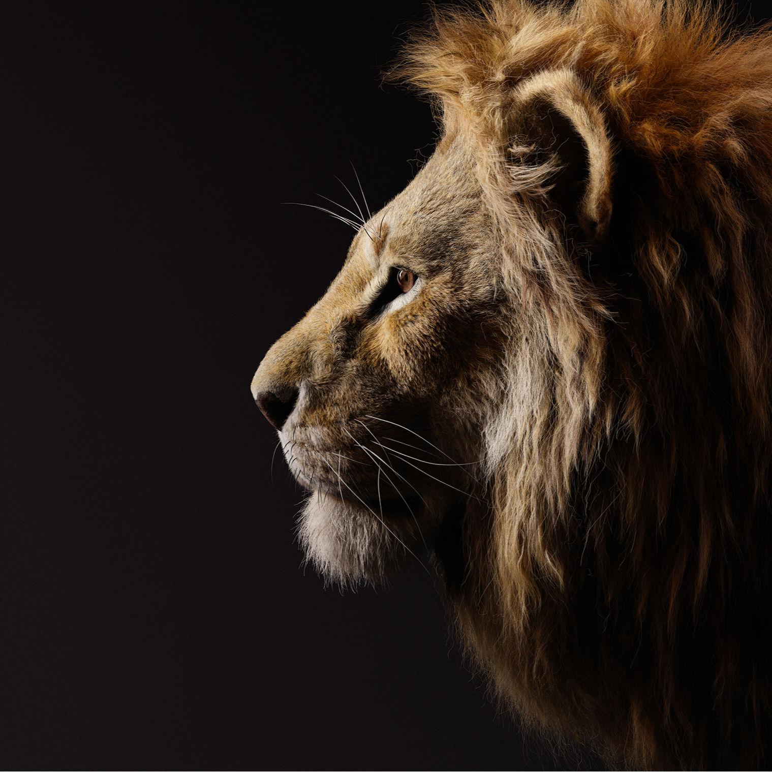 Stunning Lion King Photos