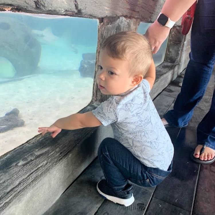 We had so much fun Visiting the Florida Aquarium Exhibits
